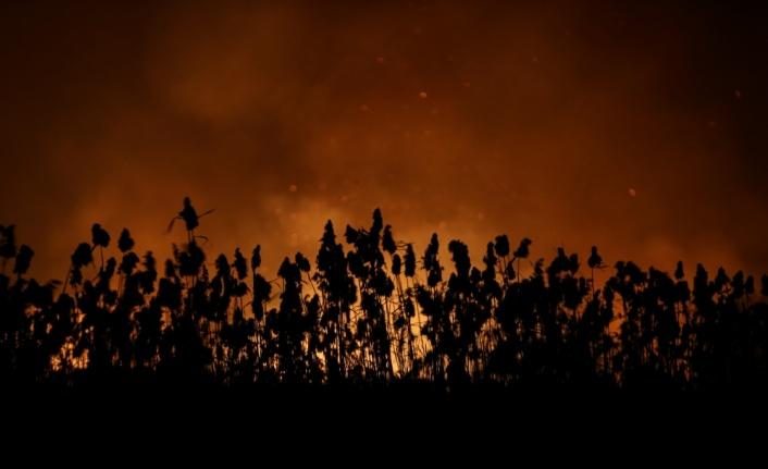 Bursa'daki sazlık yangını söndürüldü