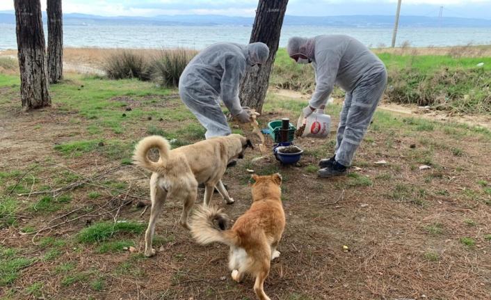 Gelibolu Belediyesi sokak hayvanları için besleme noktası oluşturdu