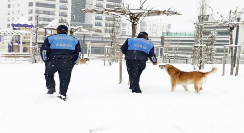 Kar ve soğukta yiyecek bulamayan sokak hayvanları unutulmadı