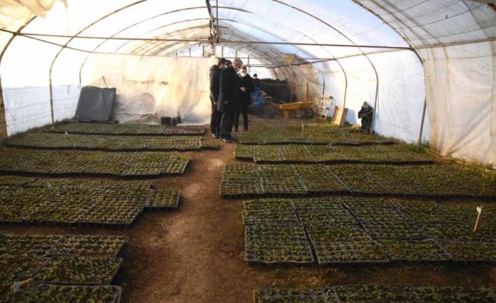 Keşan'da seralarda çalışan kadınlar 750 bin çiçek yetiştirdi