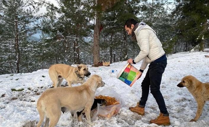 Osmaneli Belediyesi ekipleri sokak hayvanlarını besledi