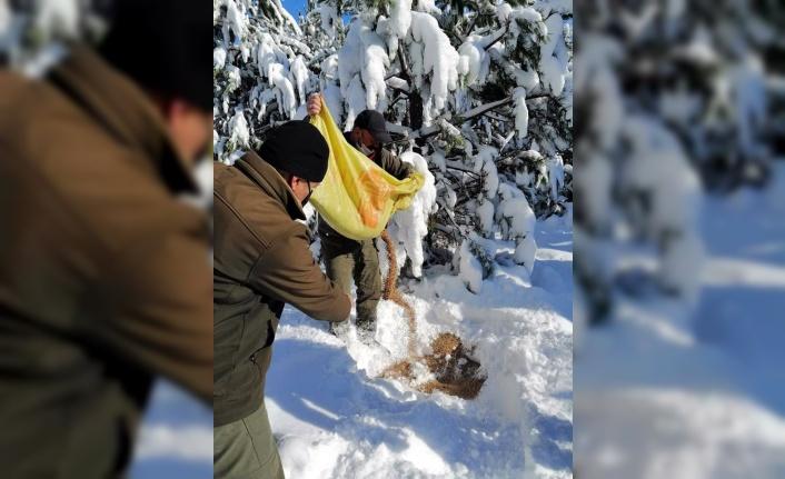 Sakarya ve Karabük'te sokaktaki ve yaban hayatındaki hayvanlara yem bırakıldı