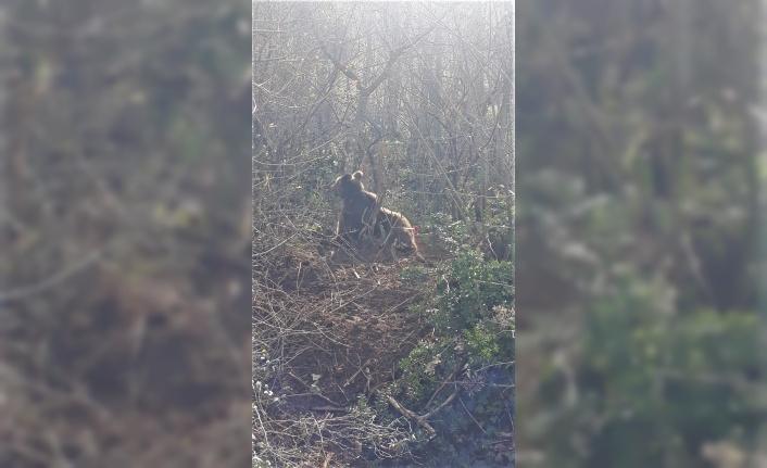 Orhangazi'de kapana takılan ayı kurtarıldı
