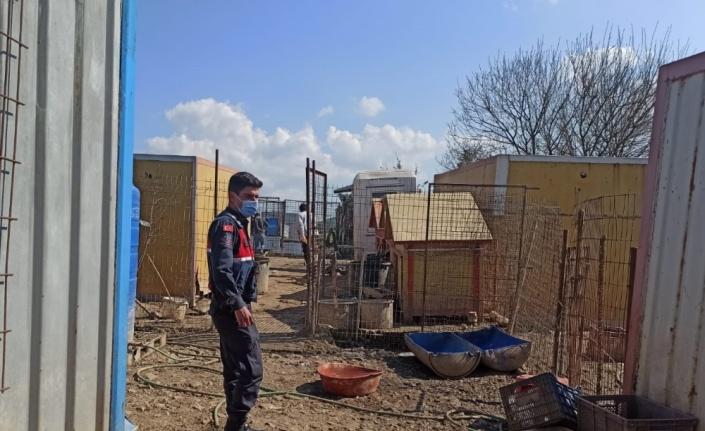 Kandıra'da sağlıksız koşullarda bakılan 80 köpek korumaya alındı