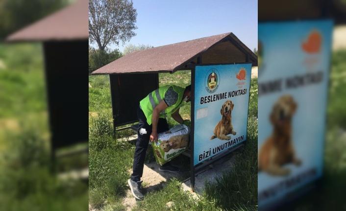 Kırklareli Valiliğinden sokak hayvanlarına mama desteği