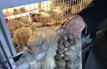 Tekirdağ'da hobi olarak başladığı kanatlı hayvan yetiştiriciliği gelir kapısı oldu