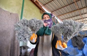 Özbekistan'a 35 bin demet lavanta ihracatı
