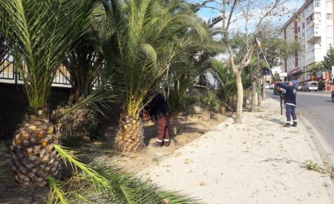 Gebze'de ağaçların bakımı yapıldı