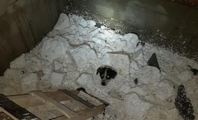 Mahsur Kalan Köpeği İtfaiye Ekipleri Kurtardı