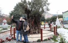 İzmitliler, 600 yıllık zeytin ağacıyla karın keyfini çıkardı
