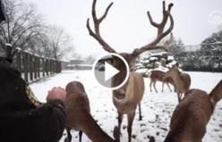Hayvanat bahçesindeki beslenme saati belgeselleri aratmıyor