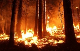 Bir Günde 33 Yangın Çıktı !