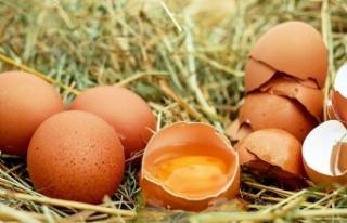 Yumurta Üretimi Yüzde 5,3 Arttı