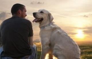 Hayvan Sevgisi İnsan Sağlığını Olumlu Etkiliyor...