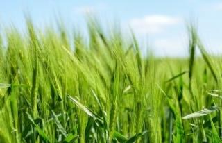 Tarımda 182 Projeye 200 Milyon TL Hibe Sağlanacak