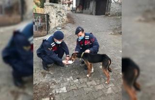Av tüfeğiyle vurulan köpeği jandarma tedavi ettirdi