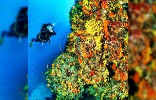Ayvalık'ın deniz çayırlarının korunması için...