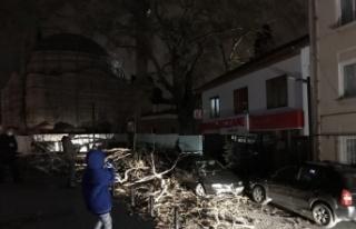 Bursa'da lodosun devirdiği çınar, park halindeki...