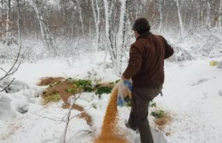 Edirne'de yaban hayvanları için doğaya 2,5 ton...