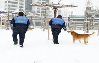Kar ve soğukta yiyecek bulamayan sokak hayvanları...