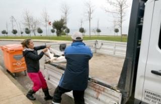 Karamürsel'de 3 sokak köpeğinin ölümüne...
