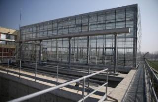 Balıkesir'de atık su arıtma tesisinde yetiştirilecek...