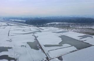 Edirne'de soğuk hava nedeniyle nehir kenarındaki...