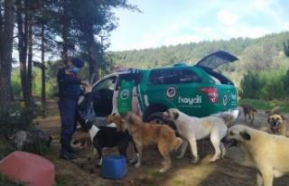 Çanakkale'de HAYDİ ekipleri 180 sokak hayvanının...