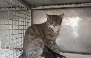 Tekirdağ'da anne kedi ve iki yavrusu sezaryenle kurtarıldı