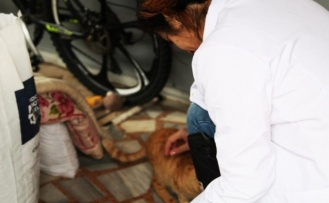 Başiskele Belediyesi´nden Sokak Hayvanlarına Mama Desteği