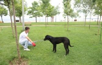 Tatil beldelerindeki sokak köpeklerine sağlık denetimleri