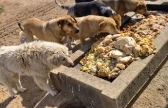 Gebze'de artan yemekler sokak hayvanlarına