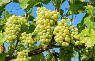Tarım- ÜFE Eylülde Yüzde 1,59 Arttı