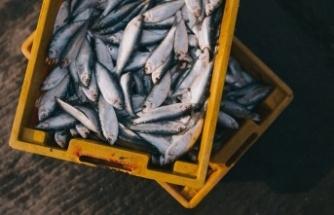 Kaçak Balık Avlayanların Sonu Geldi