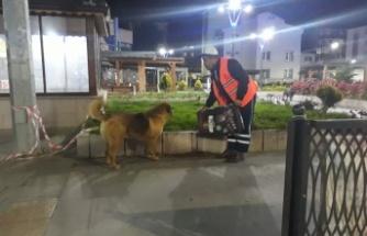 Gölcük Belediyesinden Sokak hayvanlarına 2,5 ton mama
