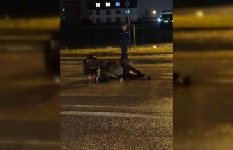Bursa'da aniden yola çıkan sahipsiz at kazaya neden oldu
