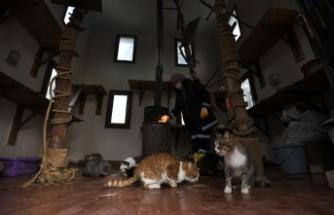 Bursa'da sahipsiz kediler