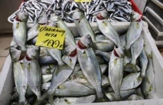 Çanakkale'de havaların soğumasıyla tezgahlardaki balık çeşitliliği arttı