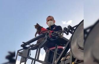 Çatıda mahsur kalan yavru kediyi itfaiyeciler kurtardı