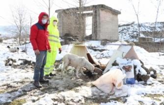 Özcan öğretmen, salgın döneminde de sokak hayvanlarını unutmadı