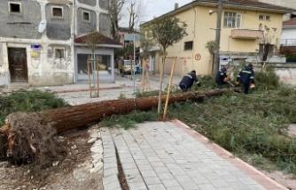 Fırtına ve şiddetli rüzgar mahalleyi elektriksiz bıraktı