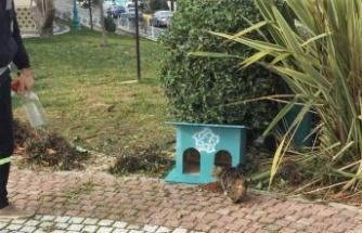 Süleymanpaşa Belediyesi ekipleri sokak hayvanlarını besledi
