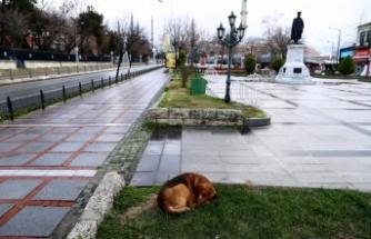 Trakya'da sokağa çıkma kısıtlamasına uyuldu