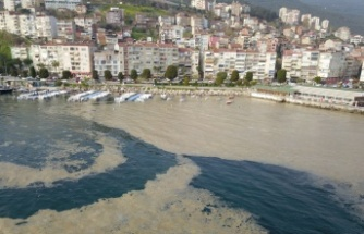 Plankton çoğalması deniz suyu kahverengiye dönüştürdü