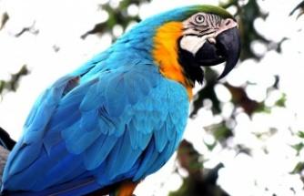 İnternetten papağan satın almak isterken dolandırıldığını iddia eden kişi polise başvurdu