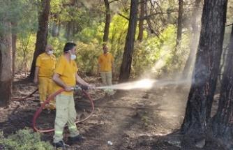 Ormanda çıkan yangını büyümeden söndürüldü
