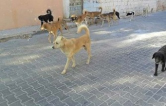 Sokak köpeklerinin saldırısına uğrayan çocuk yaralandı