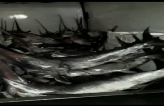 Yasa dışı kılıç balığı avcılığı operasyonu