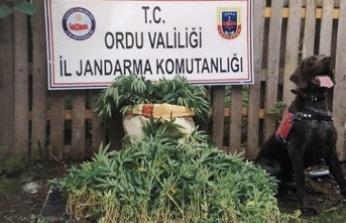 Ordu'da Uyuşturucuya Geçit Yok