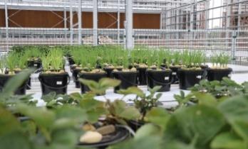 GTÜ Biyoteknoloji Enstitüsü Ar-Ge Serası Açılıyor